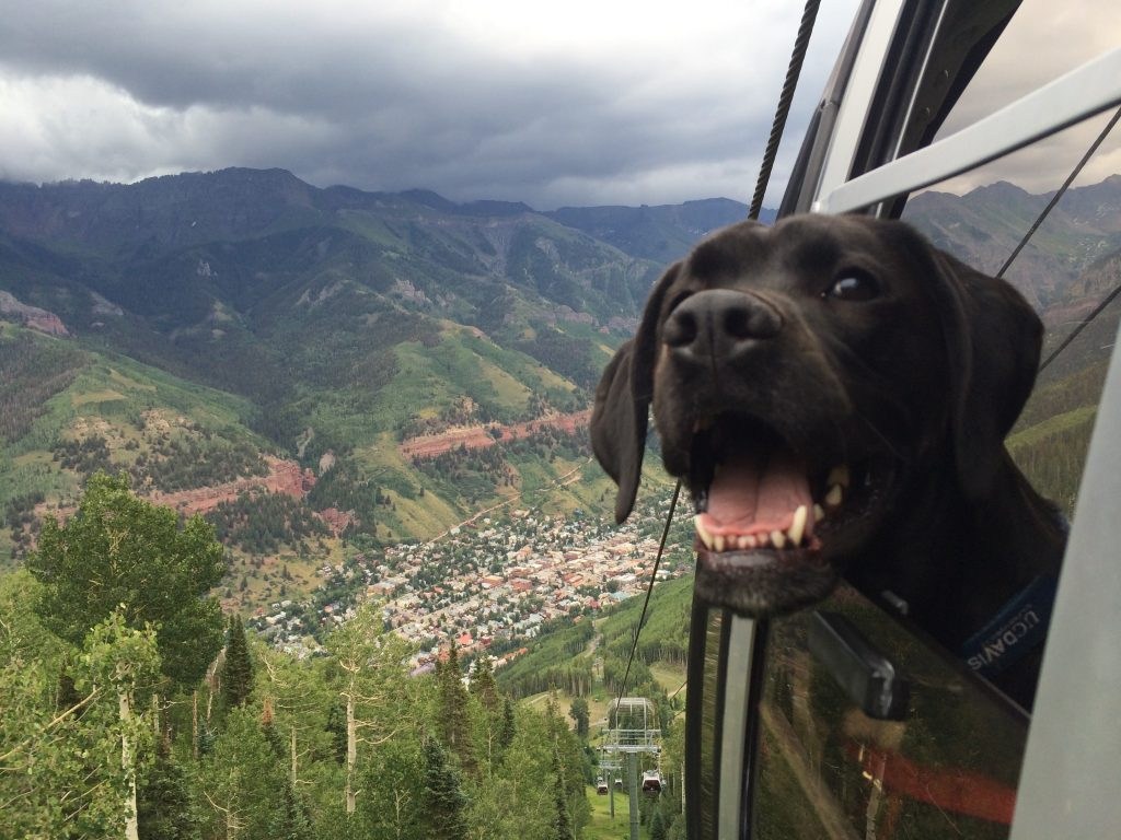 Aiden the dog riding the Gondola in Telluride, CO